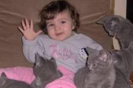 chatons type chartreux élever en famille à donner, Votre ville