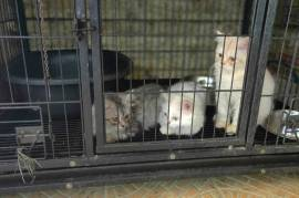 beautiful kittens for rehoming, Votre ville